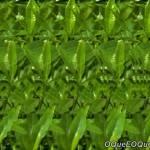 Imagem 3D de caramujo